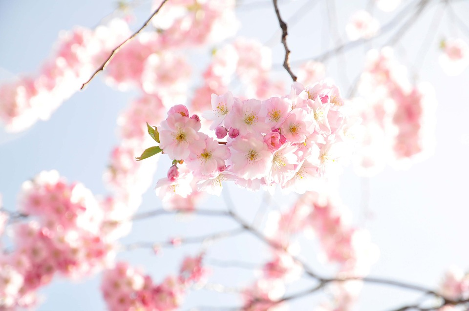 flowers-290854_960_720